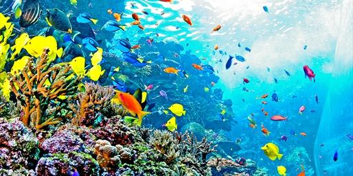 Discount coupons for atlanta aquarium
