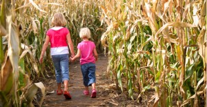 5-admission-to-corn-maze-1223561-regular
