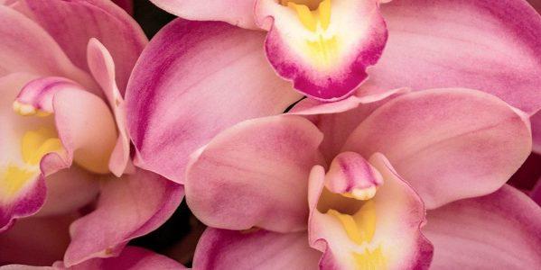 Orchid daze at the atlanta botanical garden atlanta on - Atlanta botanical garden membership ...