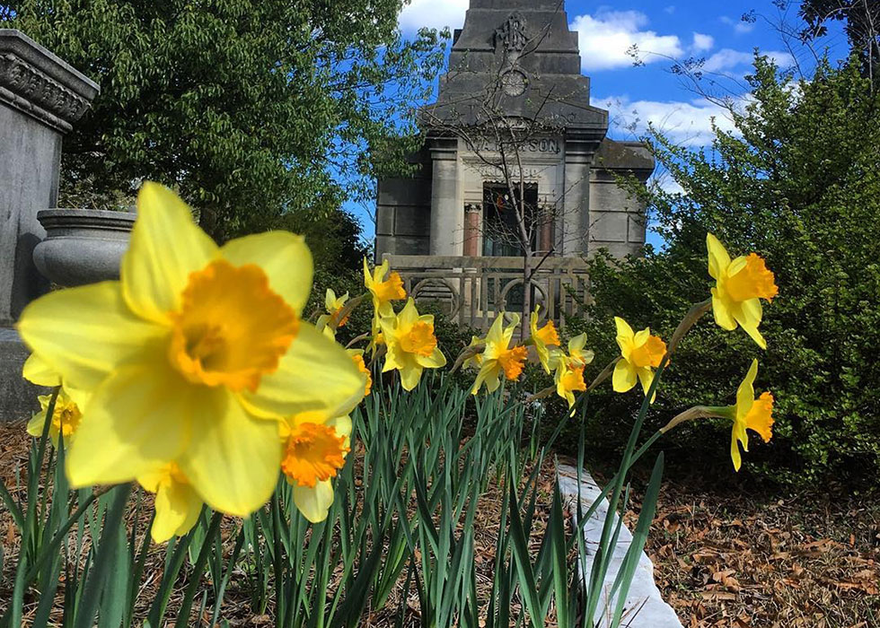 Daffodil Day is a free March event at Oakland Cemetery