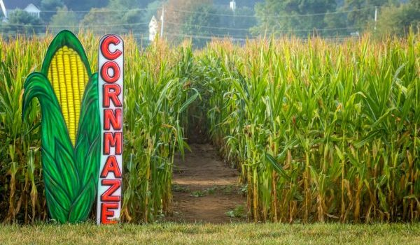 Corn Mazes to Explore