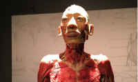 Discounts to Bodies: The Exhibition at Atlantic Station