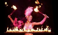 Discounts: UniverSoul Circus at the Gold Lot at the Old Turner Field in Atlanta