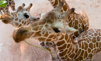 Zoo Atlanta: Discount Tickets & Free Admission Deal